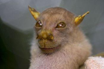 Los 10 animales más raros del mundo-1