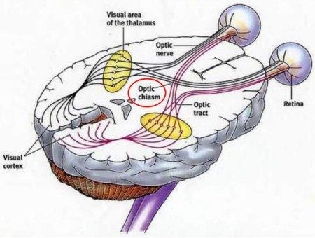 opticchiasm
